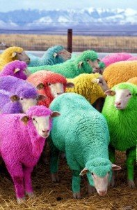 Multi-coloured sheep in a field
