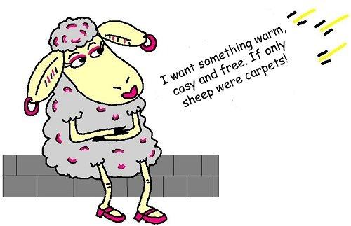 Sheep thinking