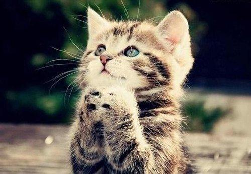 Pet friendly carpet cleaning cat praying