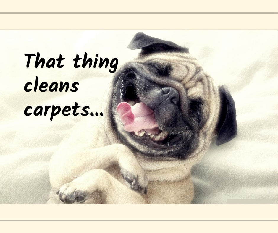 Dog laughing at carpet cleaner